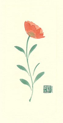 app77-box - Apricot Poppy - Box of 8 or 10