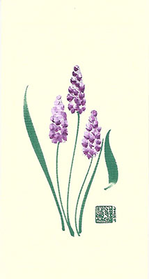 bh87-Box - Blue Hyacinth - Box of 8 or 10