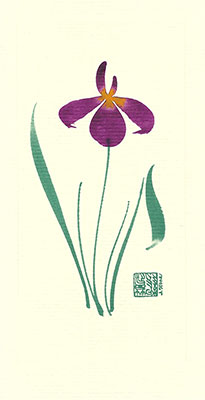 ni84-box - Nile Iris  - Box of 8 or 10