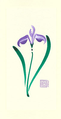 wi81-box - Wild Iris- Box of 8 or 10